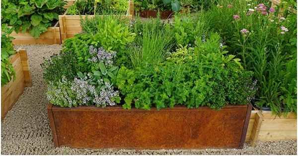 Tips How to maintain Herbs Garden on your own at Home